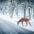 Potrącenie zwierzęcia na drodze – jak postąpić w takim wypadku?