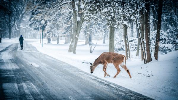 Potrącenie zwierzęcia na drodze